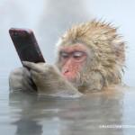 サルでも使える iPhone