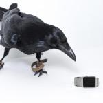 Apple Watchは動物にも人気?